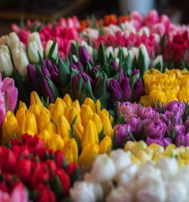 Tulipany